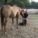 mindfulness, horse, healing, trauma process